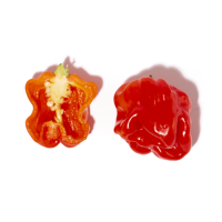 Petirroja-Chile Habanero rojo-Salsa de chile habanero rojo